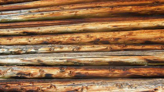 Tipologie di legno e loro utilizzi nel mondo edile